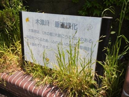 kizugawaDCIM0198.jpg