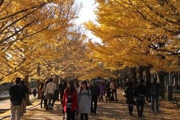 02 昭和記念公園