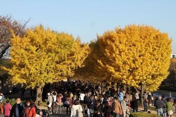 03 昭和記念公園