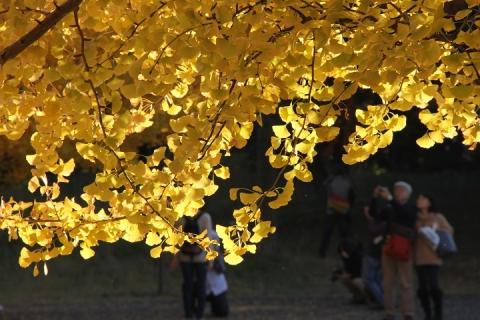 05 昭和記念公園