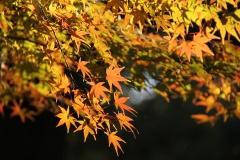 08 昭和記念公園