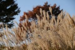 06 昭和記念公園
