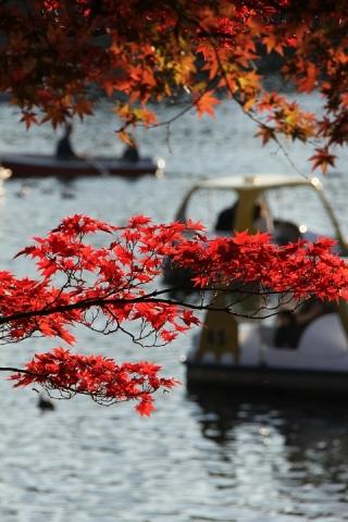 11 昭和記念公園
