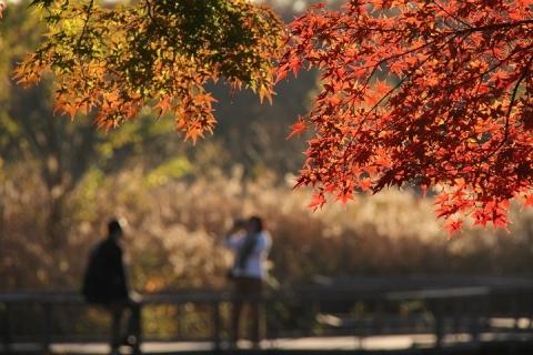 16 昭和記念公園