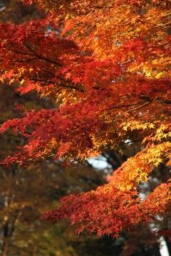 22 昭和記念公園
