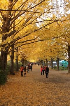 25 昭和記念公園