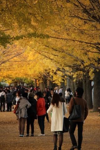 28 昭和記念公園