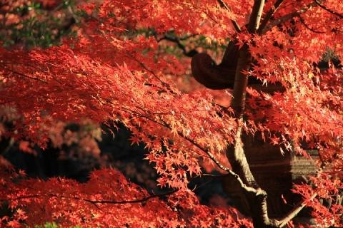 99 例年の灯篭と紅葉