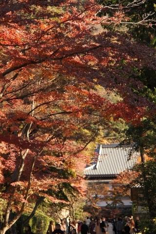 56 円覚寺