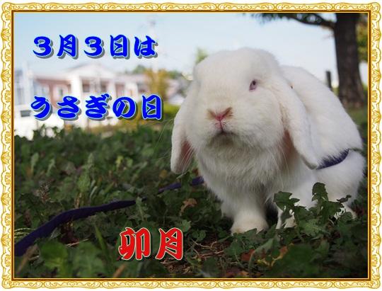 PA290402.jpg