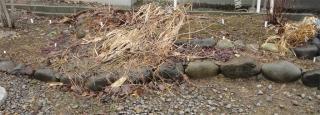 2013春 荒れた山野草花壇