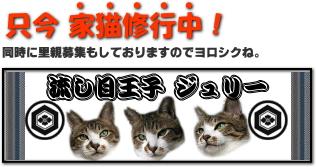 image77771.jpg