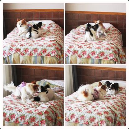 cats_20131127231808432.jpg
