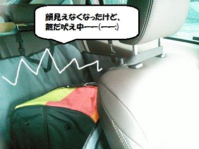 NCM_0193.jpg