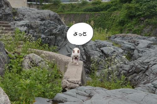 DSC_2556.jpg