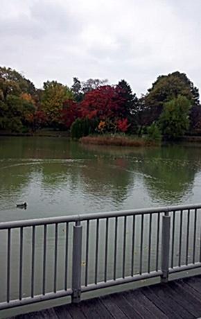 141021_1339~01中島公園7-1
