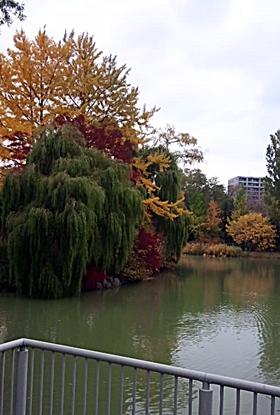 141021_1339~02中島公園6-1