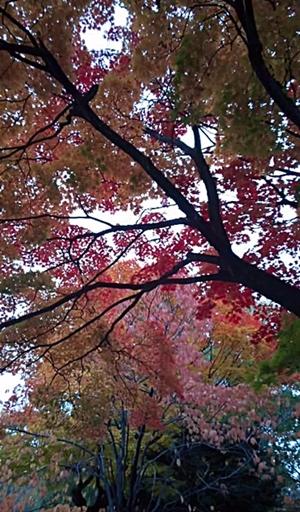 141021_1342~01中島公園2-2