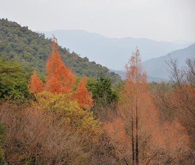 10月桜9