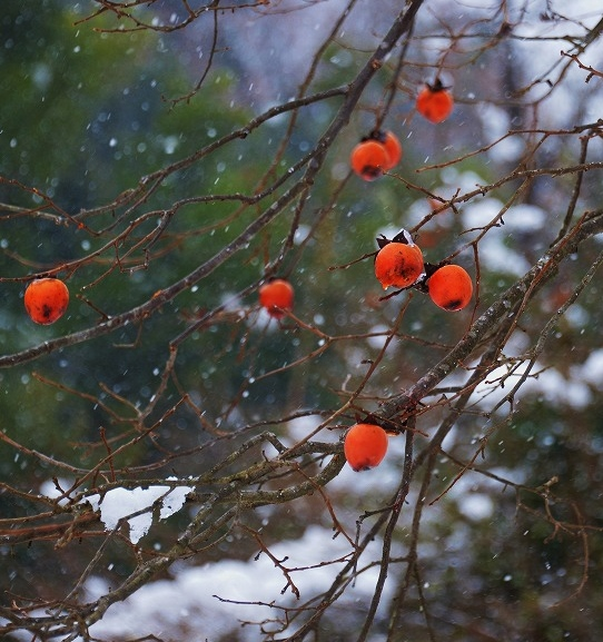 県北・雪 2
