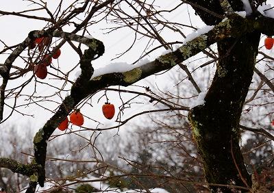 県北・雪 3