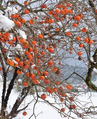 県北・雪 11