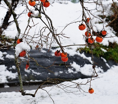 県北・雪 8