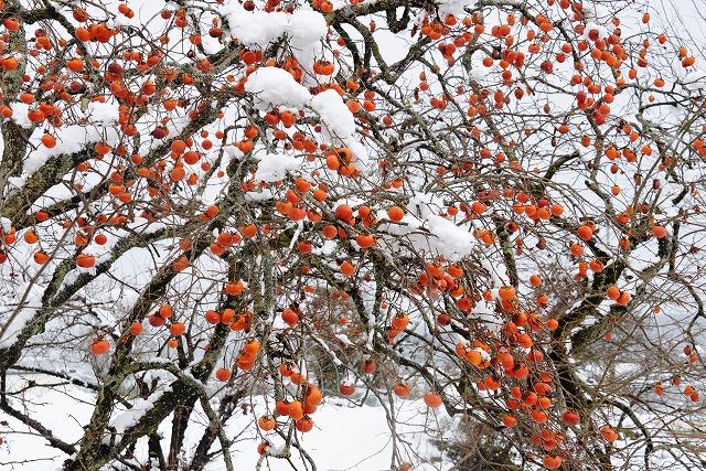 県北・雪 9