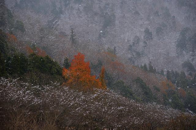 県北・雪 10