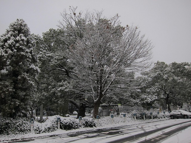 広島の雪2