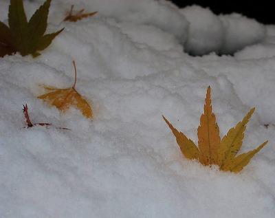 広島の雪 8