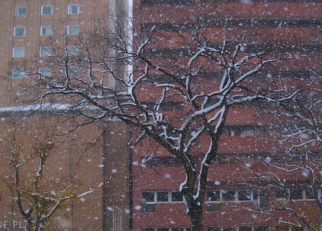 広島の雪 6
