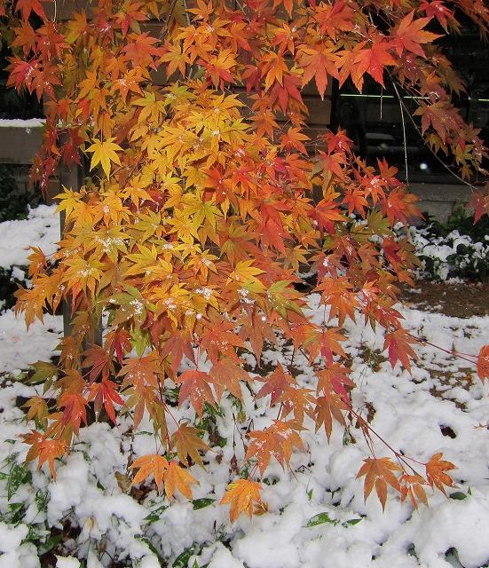 広島の雪9