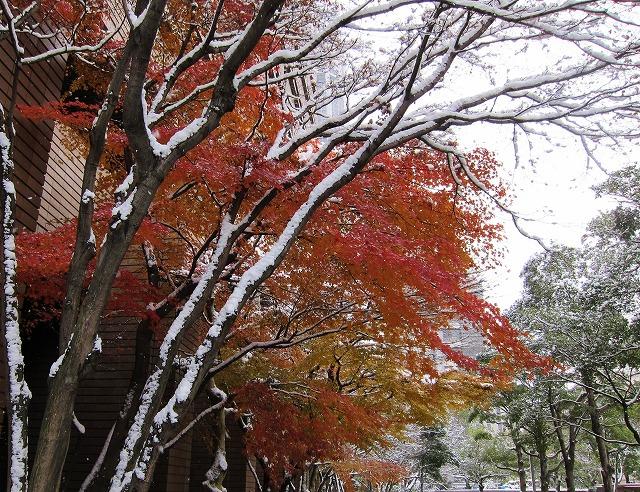 広島の雪 7