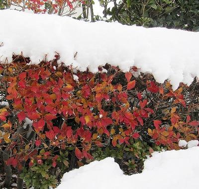 広島の雪 11