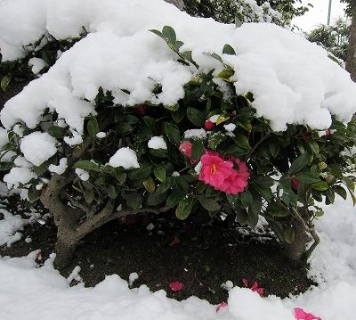 広島の雪10