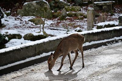 宮島雪 12