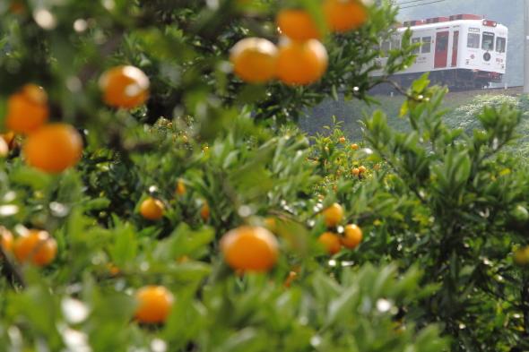 2013/11/2 和歌山電鐵貴志川線 山東~大池遊園