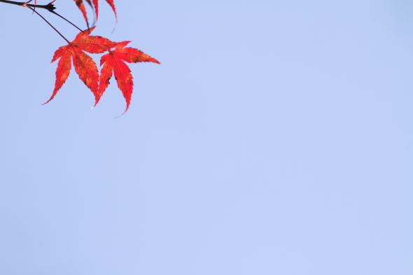 2013/11/16 南海高野線 紀伊神谷