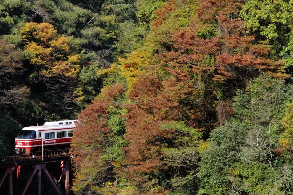 2013/11/16 南海高野線 九度山~高野下