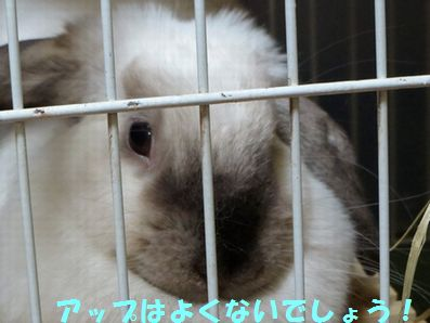 sakura 20131204 001