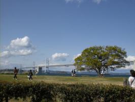 瀬戸大橋と木