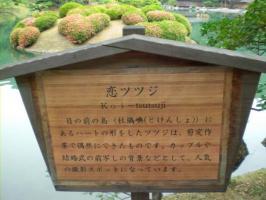 恋ツツジ3