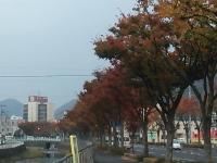 御坊川沿い2