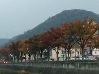 御坊川沿い1