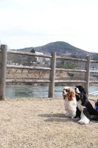 四十四田ダム公園2
