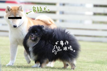 yogiken_convert_20130508092127.jpg