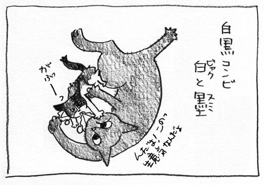 1_白黒コンビ