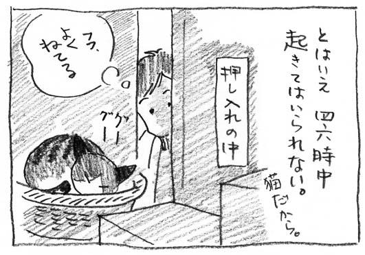 3_猫だから