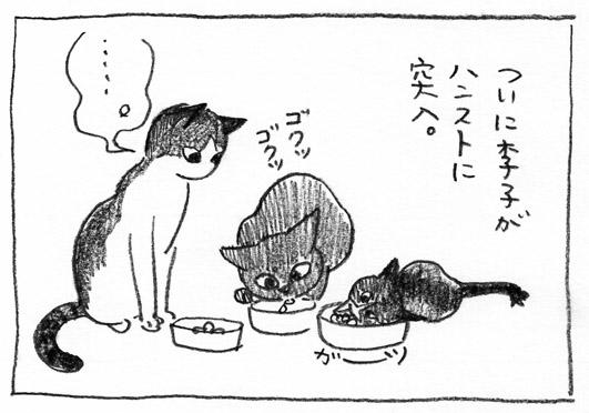 1_ハンスト